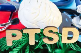 How Growing Cannabis Helps Manage PTSD And Anxiety