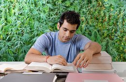 When It Comes To Cannabis Education, Do You Really Need That Master Grower Certificate