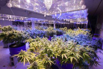 Hidden Cannabis Grow Op