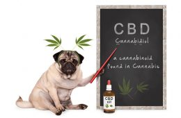 Dog CBD Oil Pets