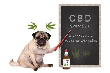 Dog CBD Oil Pets
